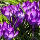 Цветотип Теплая Весна (Warm Spring, True Spring, Настоящая Весна). Характеристики цветотипа Теплая Весна, палитра, гардероб.